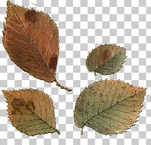 Leaf Northern Hemisphere Southern Hemisphere Autumn PNG