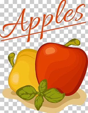 Habanero Bell Pepper Paprika Illustration PNG