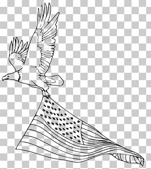 Bald Eagle Coloring Book Drawing Bird PNG