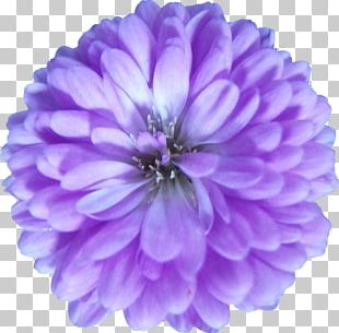 Purple Flower Violet Lilac Petal PNG