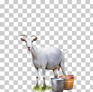 Goat Milk Cattle Sheep PNG