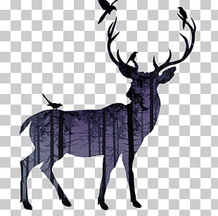 White-tailed Deer Reindeer Moose Elk PNG