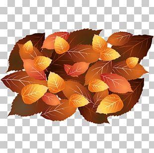 Autumn Yellow Orange PNG