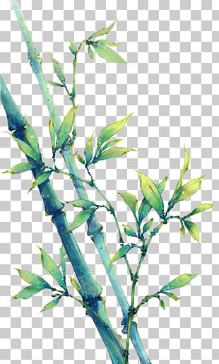 China Bamboo Art Drawing Anime PNG