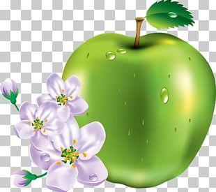 Portable Network Graphics Fruit Psd Adobe Illustrator Artwork PNG