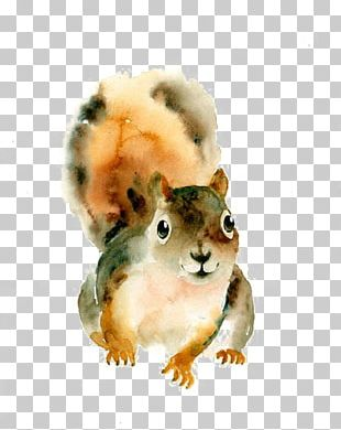 Squirrel Watercolor: Animals Watercolor Painting Art PNG