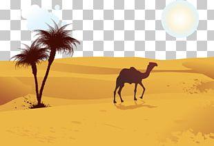 Camel Desert Computer File PNG