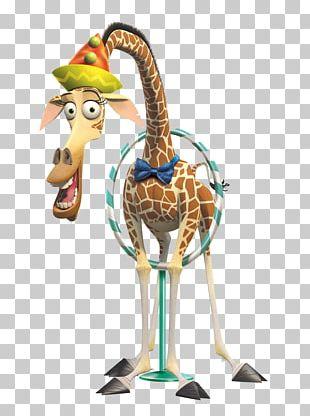 Northern Giraffe Cartoon Madagascar Illustration PNG