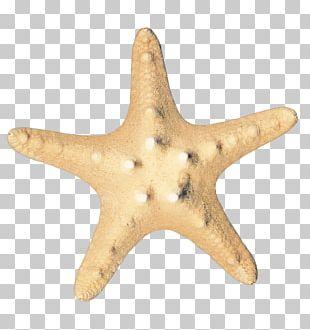 Starfish Sea Icon PNG