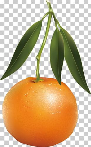 Tangerine Mandarin Orange Fruit Illustration PNG