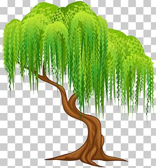 Weeping Willow Tree Wall Decal PNG