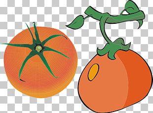 Pumpkin Orange Auglis Cartoon PNG