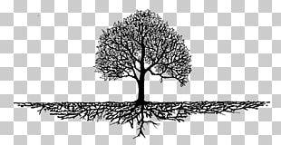 Tree Root Wood Mulch Arborist PNG