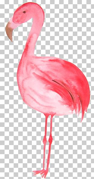 Flamingos Bird Illustration PNG
