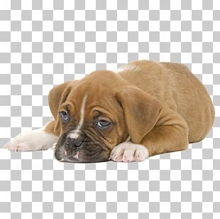 Puppy Boxer Cat Food Veterinarian Dog Food PNG