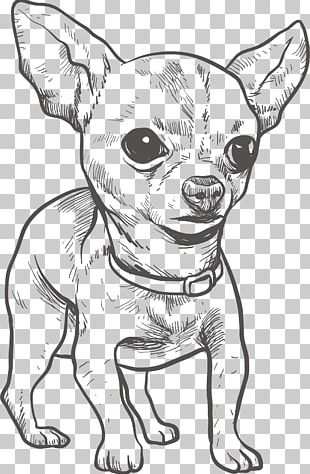 Chihuahua Puppy Drawing Illustration PNG