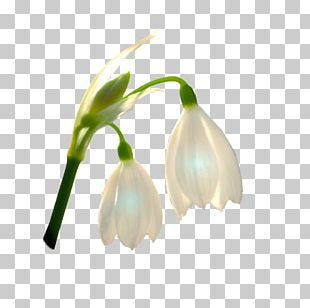 Artificial Flower Naver Blog Plant Stem Bud PNG