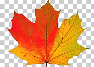 Autumn Leaf Color Why Do Leaves Change Color? PNG