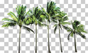 Arecaceae Beach PNG