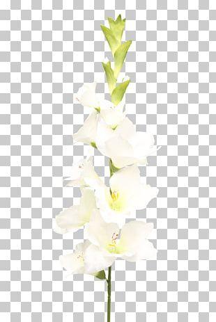 Moth Orchids Cut Flowers Floral Design Plant Stem PNG