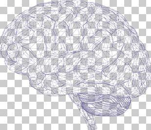 Human Brain Cerebrum Polygon Mesh PNG