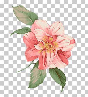 Illustration Flower Design Pink PNG
