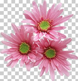 Pink Flowers Rose Free PNG