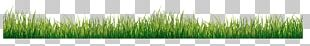 Grasses Green PNG