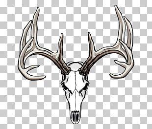 White-tailed Deer Elk Antler PNG