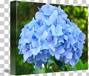Flower Garden French Hydrangea Cottage Garden Flowers Blue PNG