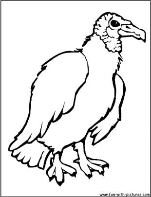 Turkey Vulture Bird Coloring Book Drawing PNG
