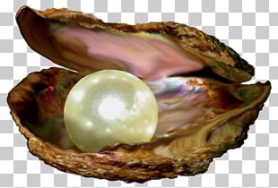 Parable Of The Pearl Parables Of Jesus Pearl Of Great Price Bible PNG