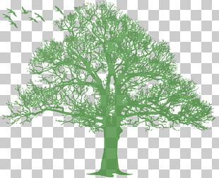 Oak Tree Silhouette PNG