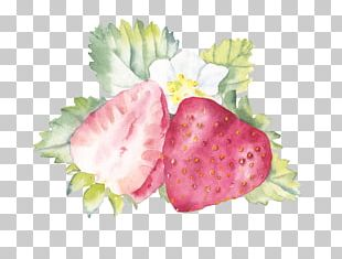 Watercolor Painting Strawberry Fruit PNG