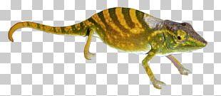 Chameleons Gecko Transparency And Translucency PNG