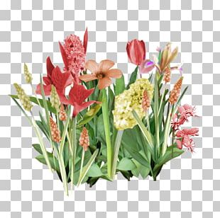 Cut Flowers Tulip Flower Bouquet PNG