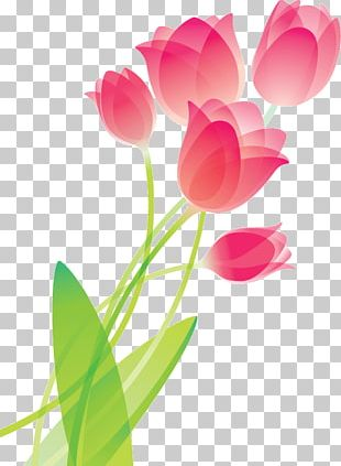 Tulip Drawing Flower PNG