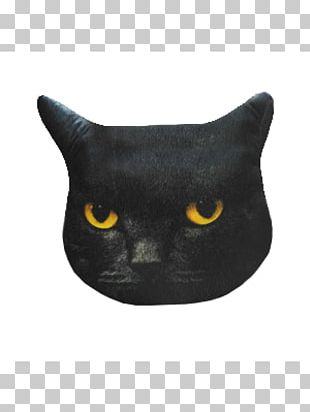 Black Cat Korat Bombay Cat American Wirehair American Shorthair PNG