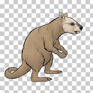 Bear Ekaltadeta Marsupial Rat Kangaroo PNG