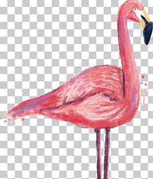 Flamingo Printmaking Printing PNG