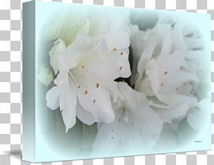 Petal Flower Floral Design PNG