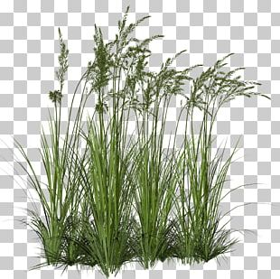 Ornamental Grass Grasses Computer Icons PNG