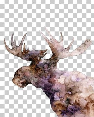Moose Deer Elk Watercolor Painting PNG