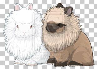 Whiskers Netherland Dwarf Rabbit Lionhead Rabbit Siamese Cat PNG
