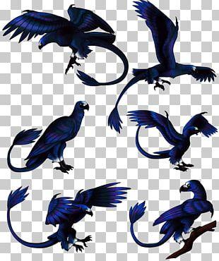 Bird Feather Beak Wildlife Tail PNG