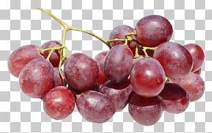 Red Wine Common Grape Vine Dog PNG