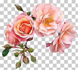 Garden Roses Flower Pink PNG