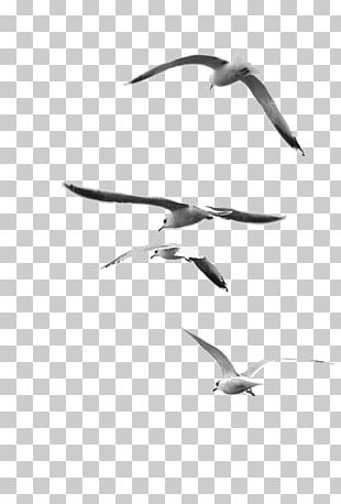 Nature Photography Black And White Bird PNG