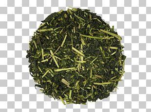 Sencha Hōjicha Green Tea Tamaryokucha PNG