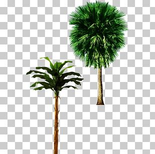 Tree Arecaceae Trunk Plant PNG